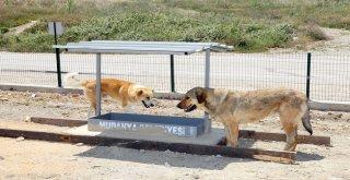 Mudanya Belediyesi'nden Sahipsiz Hayvanlara Besleme Noktası