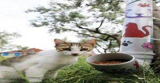 Mudanya'da Sokak Hayvanları İçin 'Mamamatik'