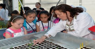 Ankara'da Küçük Bahçıvanlar iş Başında