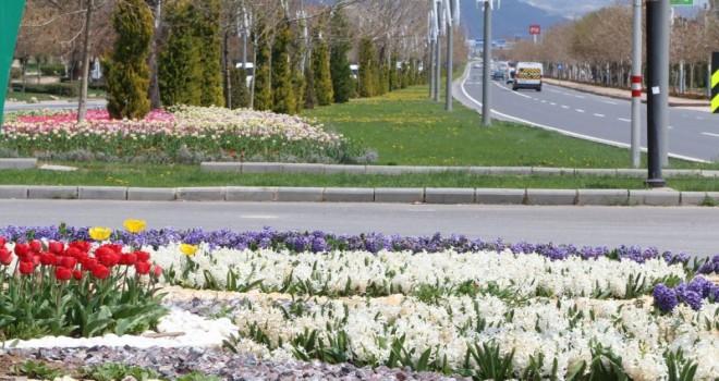 Baharın Müjdeleyicisi Laleler İle Elazığ Rengârenk
